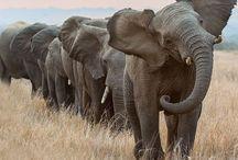 en met de grijze olifant... / wil ik een hechte liefdesband ❤️