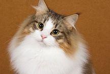 FLUFFY CATS