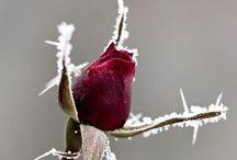 Winter. Schnee. Väterchen Frost