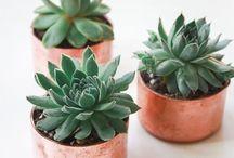 plants are beautiful