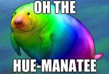 Manatee <3