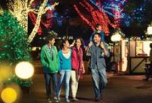 2014 Events / 2014 Events at Busch Gardens Tampa / by Busch Gardens Tampa