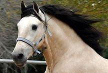 chevaux / ânes