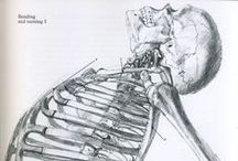 Anatomically Correct / Random snapshots of the structure, function, growth & evolution of the human form.