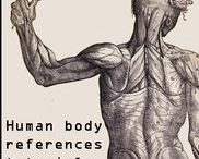 Anatomy and Bodytypes / Anatomy and Body references