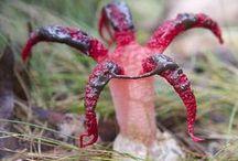 Botanical Observations / Flora, Fauna, Fungus, Lichen, Moss & Cacti