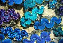 Mollusca / Caudofoveata, Solenogastres, Polyplacophora, Monoplacophora, Gastropoda, Cephalopoda, Bivalvia, Scaphopoda & the extinct Rostroconchia & Helcionelloidia.