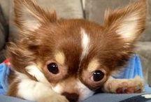 :: Cute Dogs ::