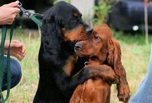 Best Friends / Best Friends