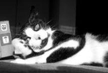 Mias & Pintas da Silva / My cats