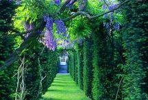 GARDEN || F L O W E R S / flower pot gardening