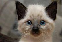 Cats / I love cats !!!!!