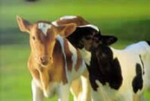 Raw Milk Facts / Get the facts on raw milk.