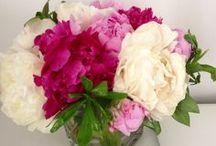 FLEURS / Fleurs & Bouquets