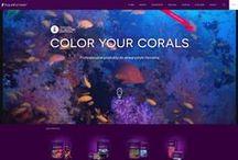 Aquaforest / Strona internetowa aquaforest.eu zaprogramowana przez Mediaflex.