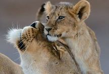 Animal love - mothers with their little ones / Heartwarming pictures from the animal kingdom. So cute!