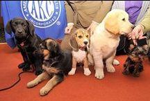 Top 20 Popular Breeds / Top 20 Breeds thru the years  nolostdogs.org
