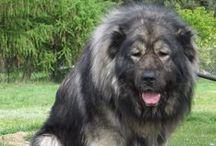 Russian Dog Breeds / Sponsored by NoLostDogs.org