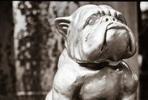 """Maddox Mascot - The British Bulldog / """"The British Bulldog does not walk in a straight line, but is proud and always knows exactly where he is going"""""""