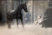 Pferdefotografie / Pferdefotografie & More