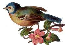 Clipart birds