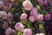 Garden&Flowers&Home&Design&Decoration