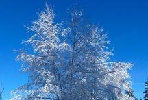 Wintertype kleuradvies dames / Je kleuren zijn helder en koel