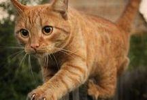 ANIMALS ~ Cats ~ Kissat