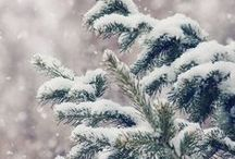 ❄☃ Winter, Snow ☃❄ / I LOVE WINTER AND SNOW. AND YOU? :)