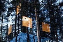 tree house/cabin