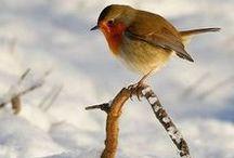 ANIMALS ~ Birds ~ Linnut