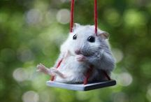 ♥ Cute But Crazy HAMSTERS ♥
