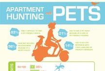 Infographics / Get your data visually with these great infographics from Rent.com!