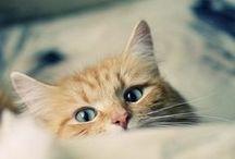 Gatos ♥