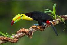 Toucan(S)