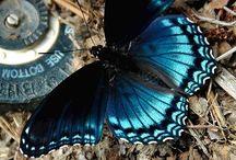 Butterflies. Pure Colour.