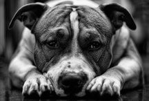 A dog doesn't care if your rich or poor, clever or dull, smart or dumb. Give him your heart and he'll give you his.