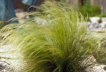 Lovely Green - Ihania vehreitä vihreitä / Tunnelmakuvia erilaisista puutarhoista. Reheviä, runsaita pihoja ja yksityiskohtia!