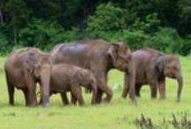 Sri Lanka serendipity