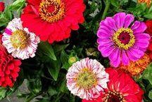 garden#flowergarden
