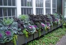 garden#veggie