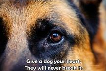 Dog quotes to share / It's about reminding the world of what a precious gift dogs are in our lives and a reminder of how to treat them in return  for their unconditional love. Never walk away from an abused animal that is crying out for help and thinks no one can hear them. Care enough to be theirr voice.