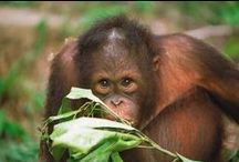 Borneo's jungle