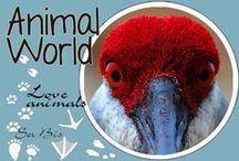 AW-Love animals
