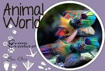 AW-Ocean And Sea Creatures / Under The Sea&Colorful fishes