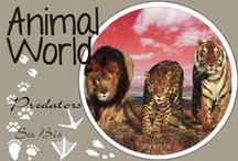 AW-Predators / The most regals animals in the world