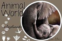 AW-Elephants