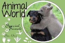 AW-Special Friends / Adorable unexpected animals friendship