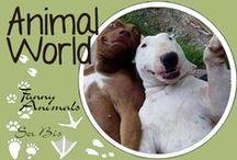 AW-Funny animals