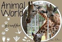 AW-Giraffes